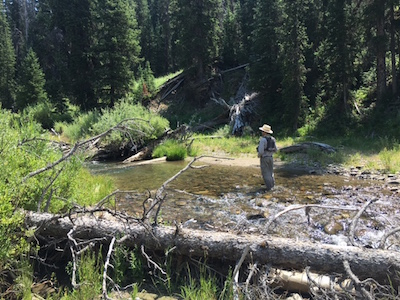 Deep in bear country for cutthroat