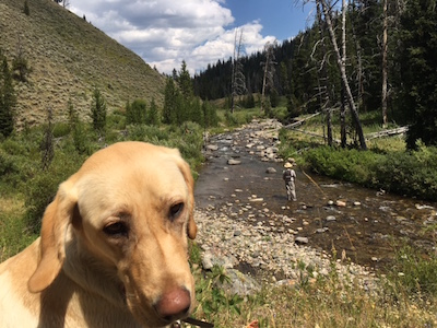 Lulu on a small stream in Wyoming backcountry