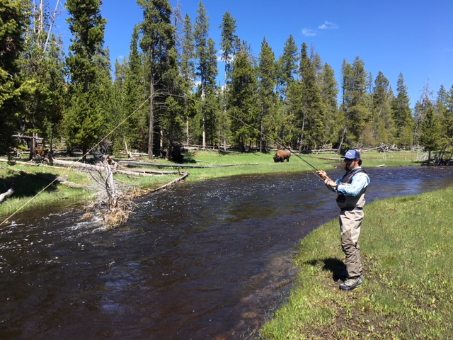 Fishing in Yellowstone among the Bison