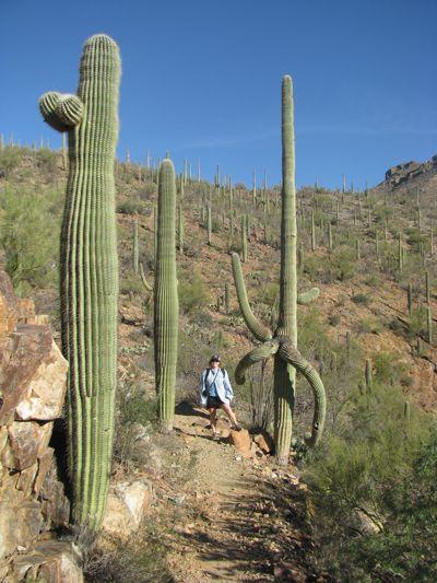 amongst the cacti