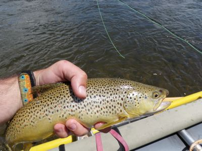 Green River Brown