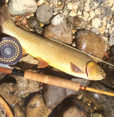 bamboo and cutthroat; fly fishing in Jackson Hole