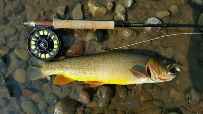 Fine spotted cutthroat trout