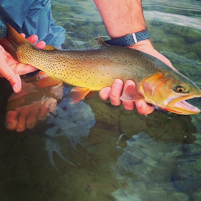 Fall cutthroat on tiny dry