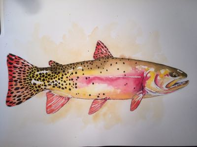 Yellowstone cutthroat trout watercolor by Nate Bennett