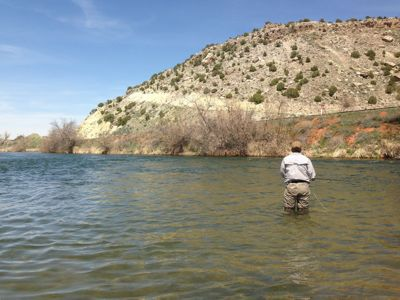 Wading the Bighorn