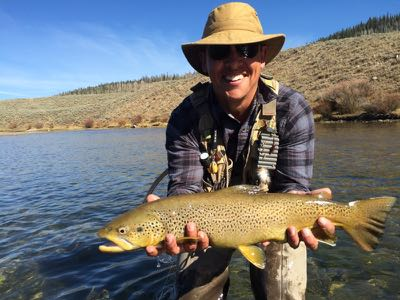 Brown trout in Wyoming