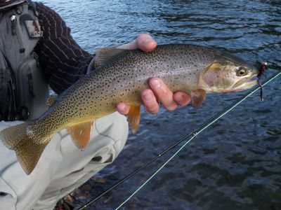 Cutthroat success as winter sets in