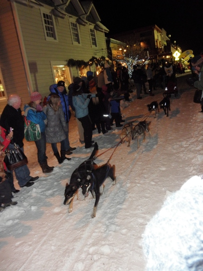 sled dog races by